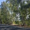 I benefici della forestazione urbana